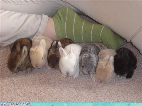 bunnies caption contest rabbits - 3254409984