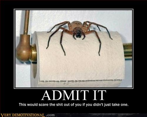 demotivational,hilarious,scary,spider,Terrifying,toilets