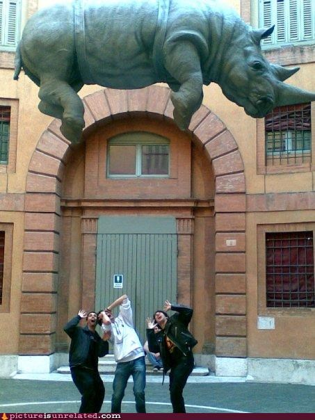 animals,europe,flying rhino,wtf
