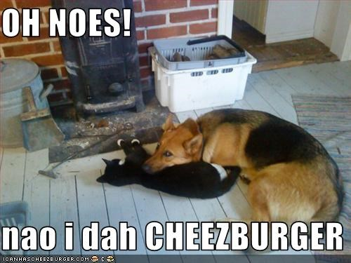 Cheezburger Image 3256813312
