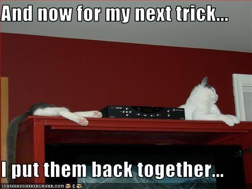 magic,trick