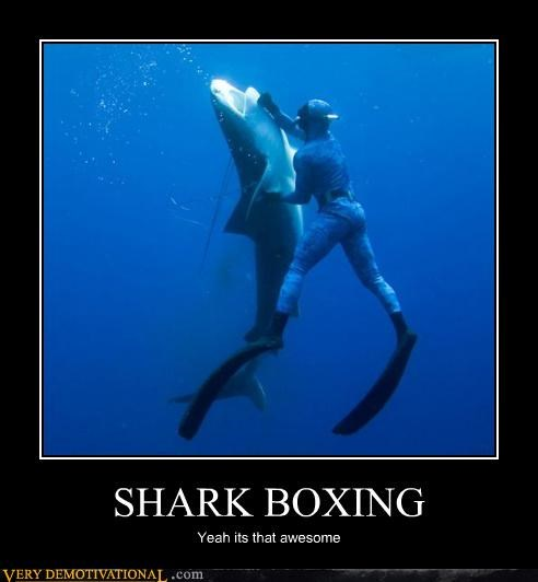 awesome,boxing,shark