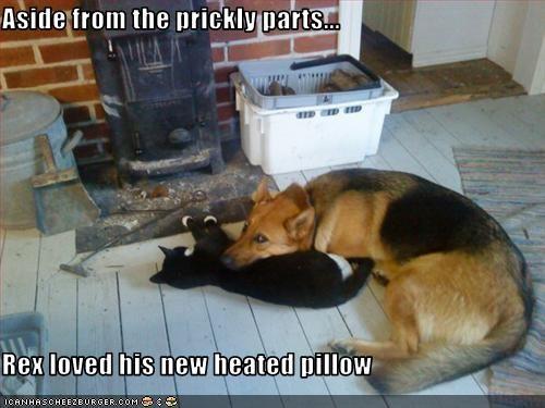 german shepherd Heat lolcats love Pillow - 3257361408