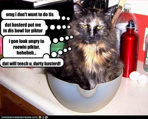 omg i don't wunt to do tis dat basterd put me in dis bowl fur piktur i gon look angry to roowin piktur, heheheh... dat will teech u, durty basterd!