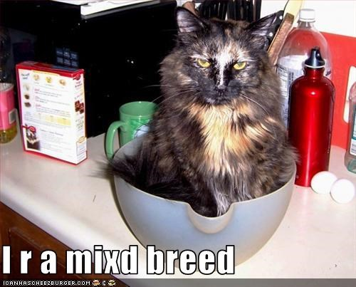 mixed pot - 3258516992