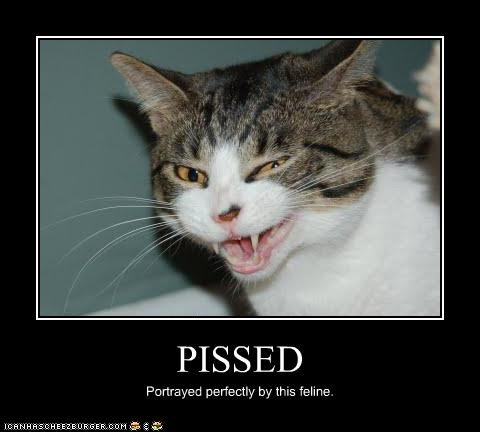 PISSED Portrayed perfectly by this feline.