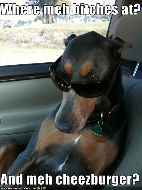 Cheezburger Image 3259797248