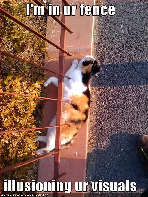cyoot kitteh of teh day,escape,fence,magic,orange