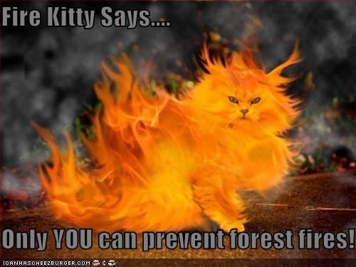 fire kitty says only you can prevent forest fires cheezburger