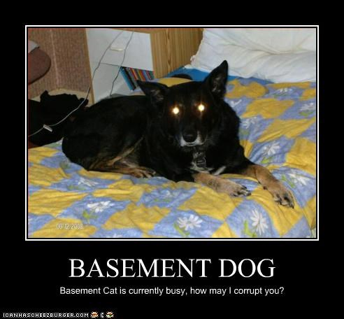 basement cat,basement dog,evil,german shepherd