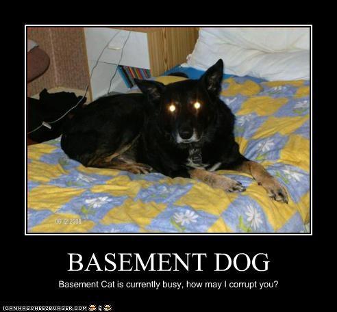 basement cat basement dog evil german shepherd
