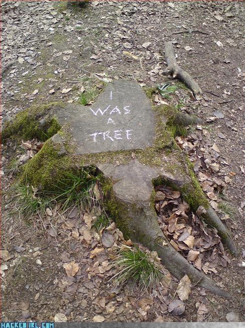 nostalgia trees - 3261801472