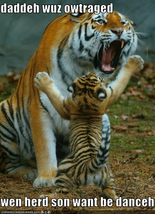 angry dadcat dancer loltigers - 3261998848