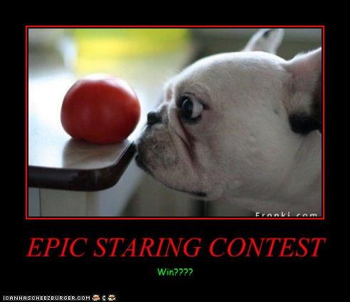 EPIC STARING CONTEST Win????