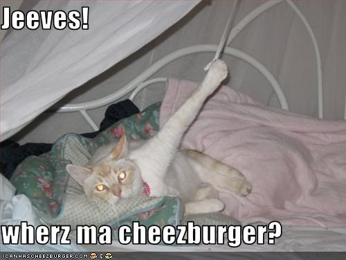 Cheezburger Image 3262095360