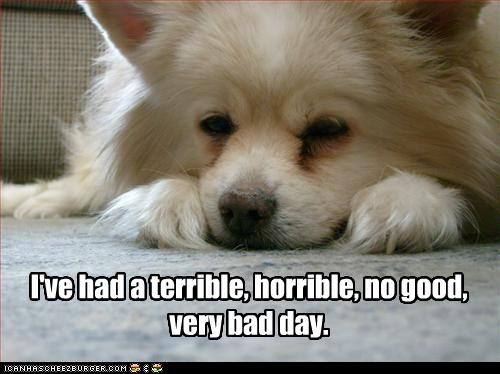 Funny Memes For A Bad Day : I ve had a terrible horrible no good very bad day