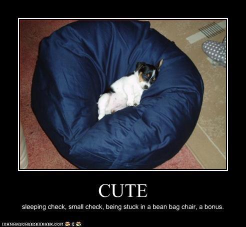 CUTE sleeping check, small check, being stuck in a bean bag chair, a bonus.