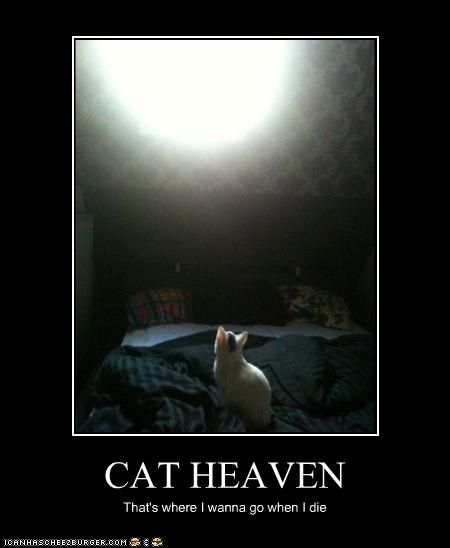 CAT HEAVEN That's where I wanna go when I die