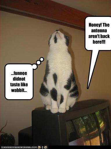 ...funnee didnot taste like wabbit... Honey! The antenna aren't back here!!!