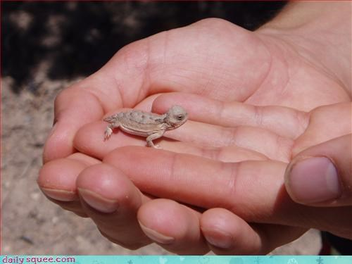 big hands,lizard,so tiny