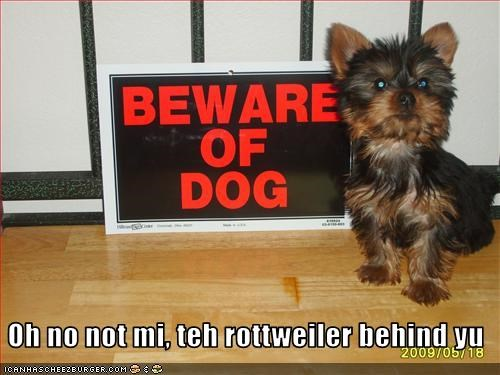 beware of dog Hall of Fame sign yorkshire terrier - 3266958592