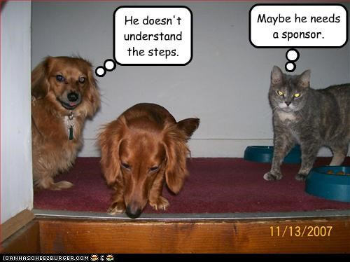 lolcats long-haired dachshund sponsor steps