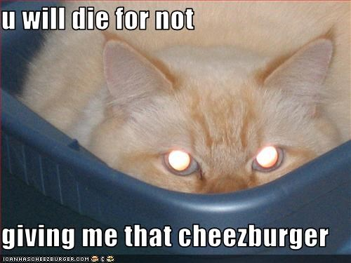 Cheezburger Image 3268287744