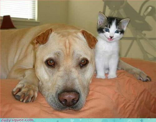 dogs,kitten,truce