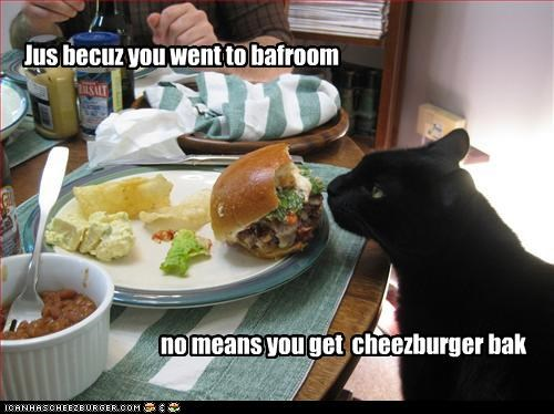 Cheezburger Image 3269059584