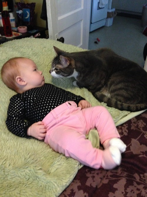 baby kids parenting Cats national cat day