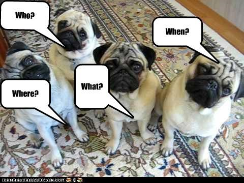 ask pug questions what when where who why