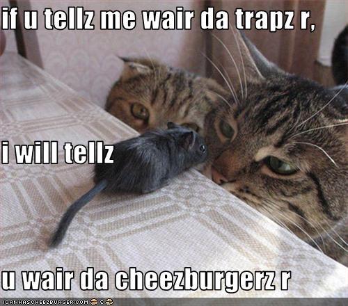 Cheezburger Image 3270315008