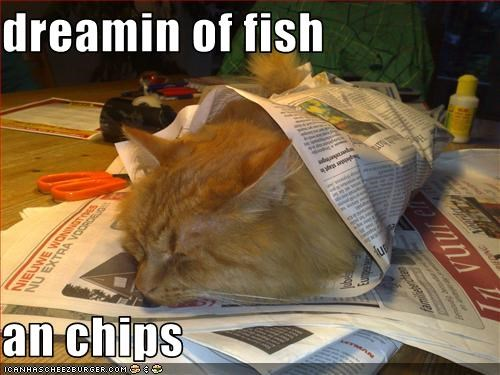 dreaming,fish,fud,nap,want