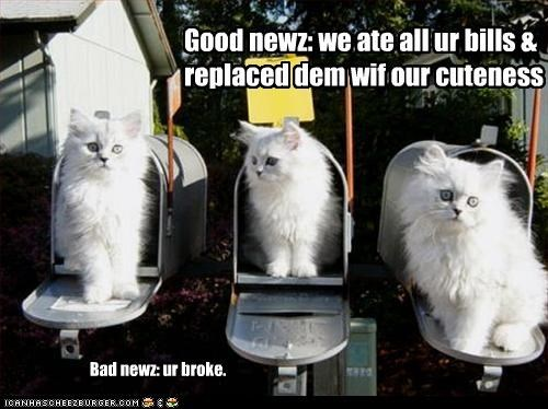 bills cute kitten mail mailbox - 3272430592
