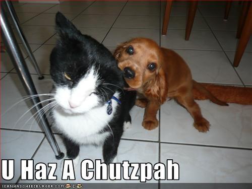 Cheezburger Image 3272691712