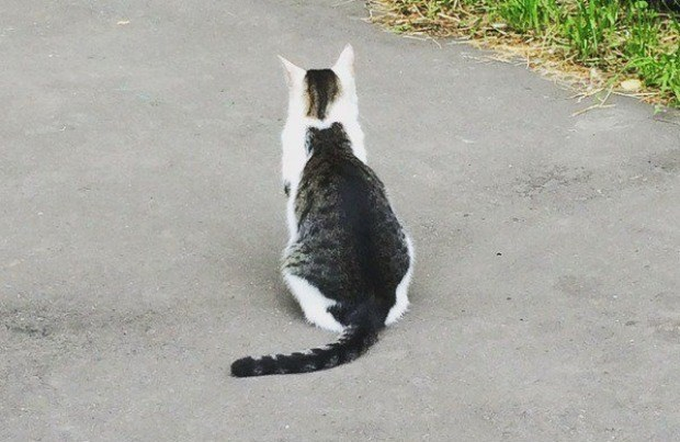 photo of inception cat goes viral - cat with another cat on his back