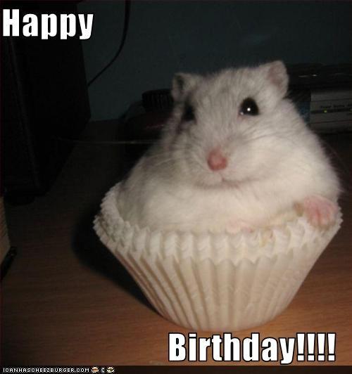 Hamster - Нарру Birthday!!!! ICANHASCHEEZEURGER COM