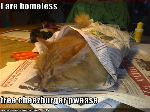 Cheezburger Image 3273069568