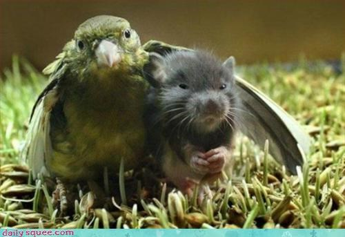 bird,friends,rat