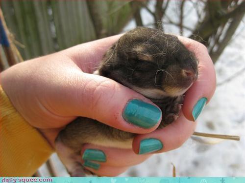 bunny cute pretty - 3273386496