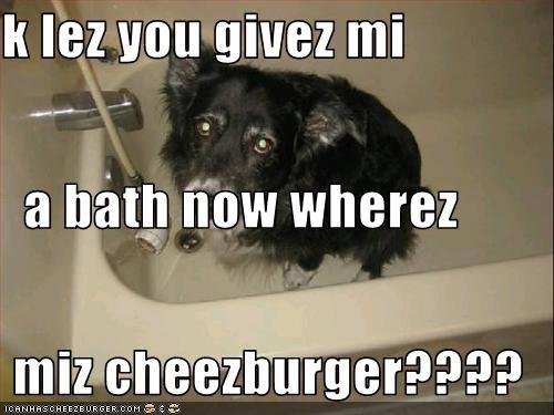 Cheezburger Image 3273953280