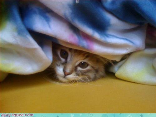 cute face kitten - 3274839040