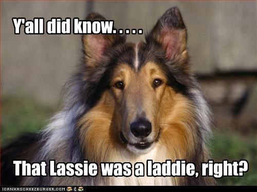 Y'all did know. . . . . That Lassie was a laddie, right?