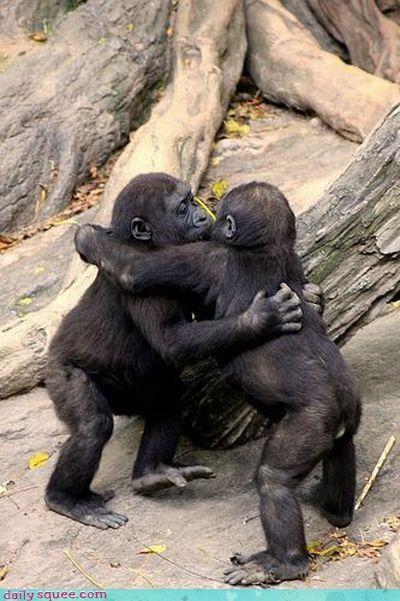 baby gorilla hug - 3275894272