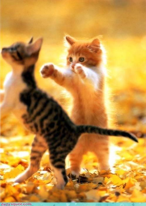 kitten noms - 3275975424