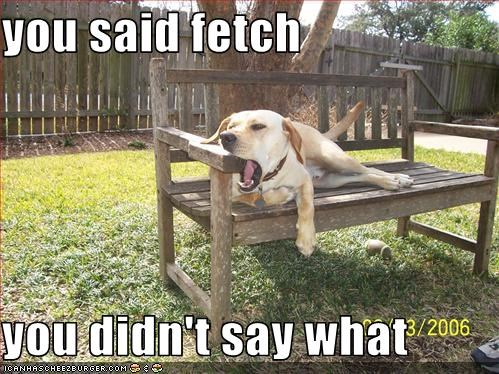 bench Command didnt-say fetch laying down lazy specificity vagueness what