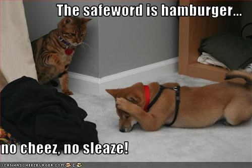 Cheezburger Image 3276546560