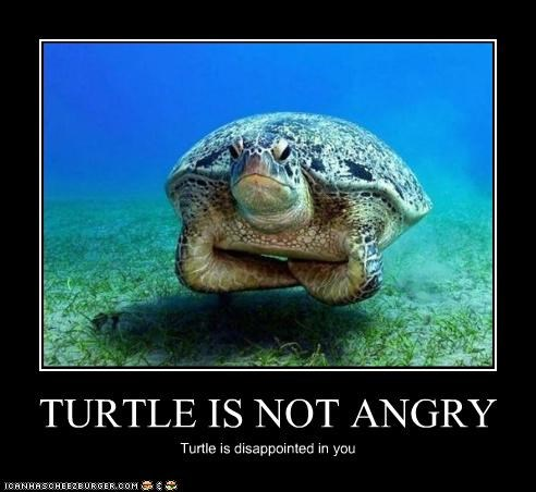 angry disappointed Hall of Fame lolturtles - 3276870912