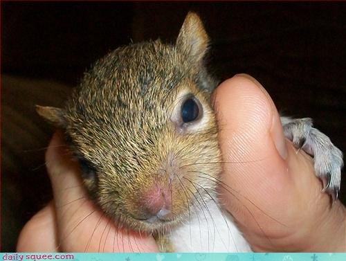 so cute so tiny squirrel - 3277027072