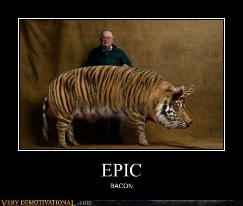 animal bacon fat pig Pure Awesome tiger - 3277262848